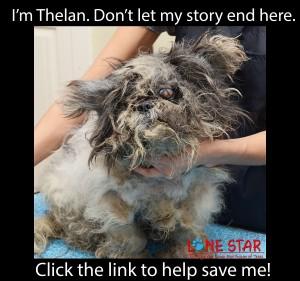A Thelan Blog TAO_7174